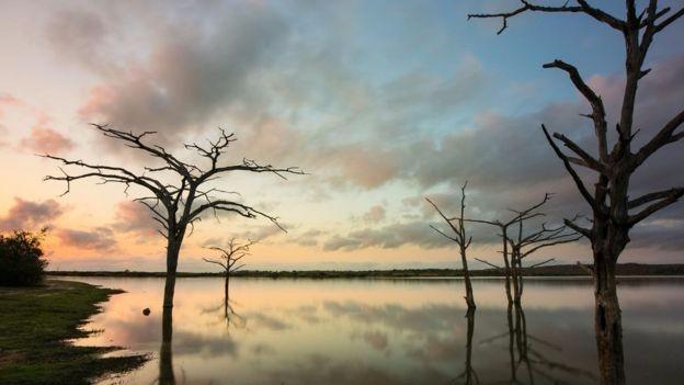 У 2014 році ЮНЕСКО внесла Національний парк Селус в Танзанії до списку об'єктів, що знаходяться під загрозою передусім через збільшення браконьєрства