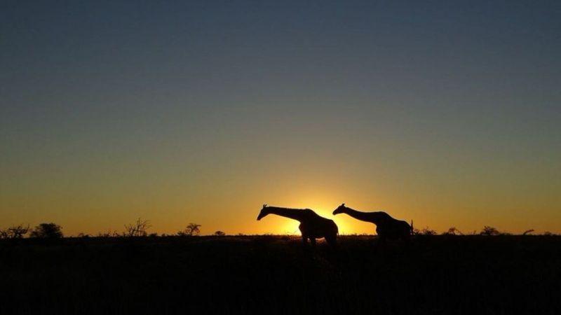 Дикі тварини зустрічалися дорогою в Намібії досить часто. Джерело: ANNA GRECHISHKINA