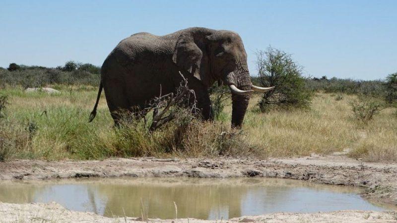 Національний парк Etosha, Намібія. Джерело: ANNA GRECHISHKINA